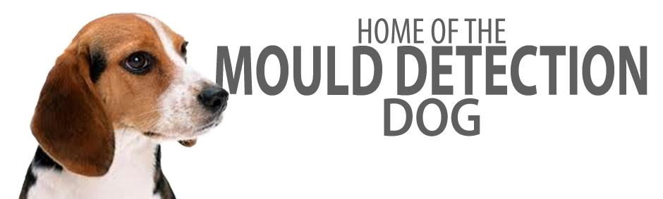 Mould Detection Dog
